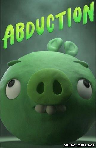 истории свинок
