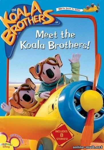братья коалы